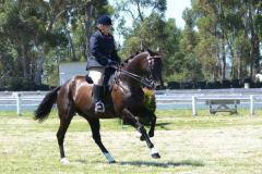 Equestrian SANESA Q1 2017