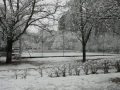 snow009
